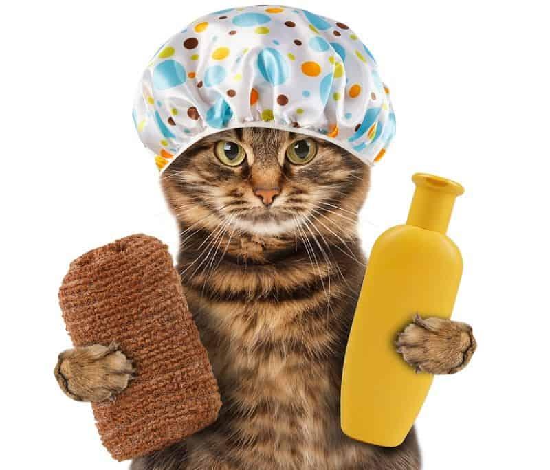 Kedilerimizi ve Köpeklerimizi Yıkanırken Nelere Dikkat Etmeliyiz?